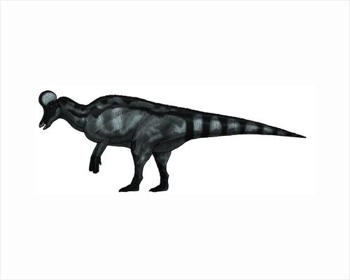 Corythosaurus, a large hadrosaurid dinosaur. by Vitor Silva