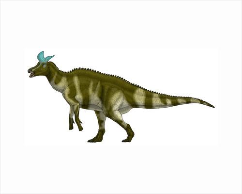 Lambeosaurus lambei, a hadrosaurid dinosaur from the Cretaceous Period. by Vitor Silva