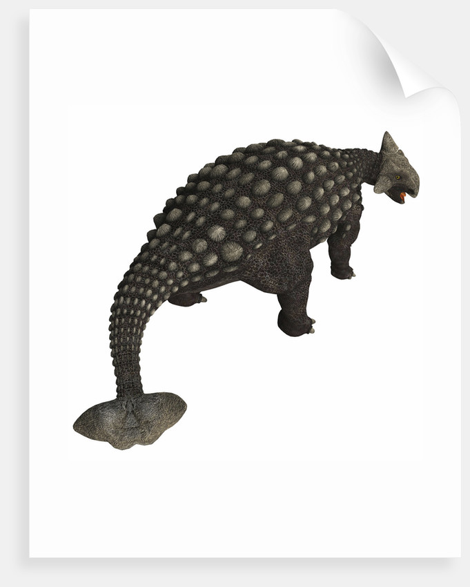 Ankylosaurus, an armored dinosaur from the Cretaceous Period. by Corey Ford