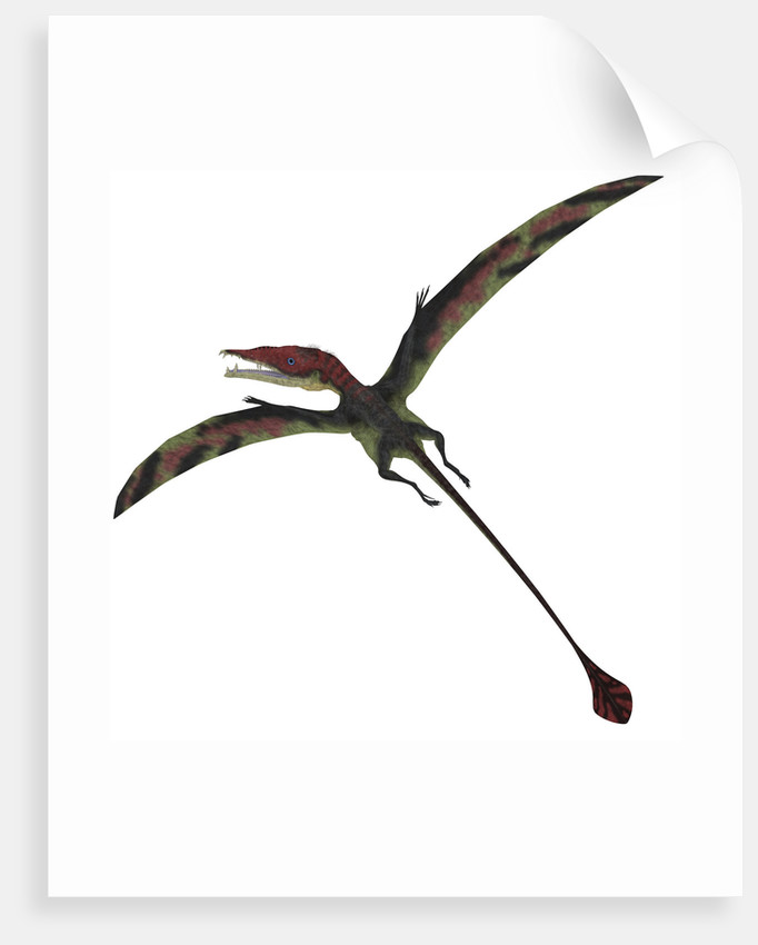 Eudimorphodon, a pterosuar from the Late Triassic Period. by Corey Ford