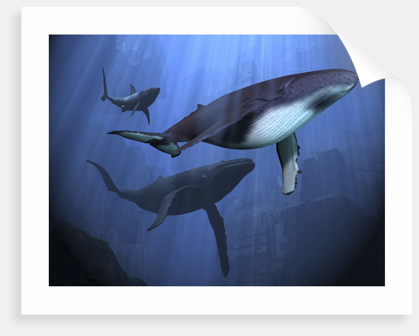 Two humpback whales and a shark swim among ancient city ruins. by Corey Ford