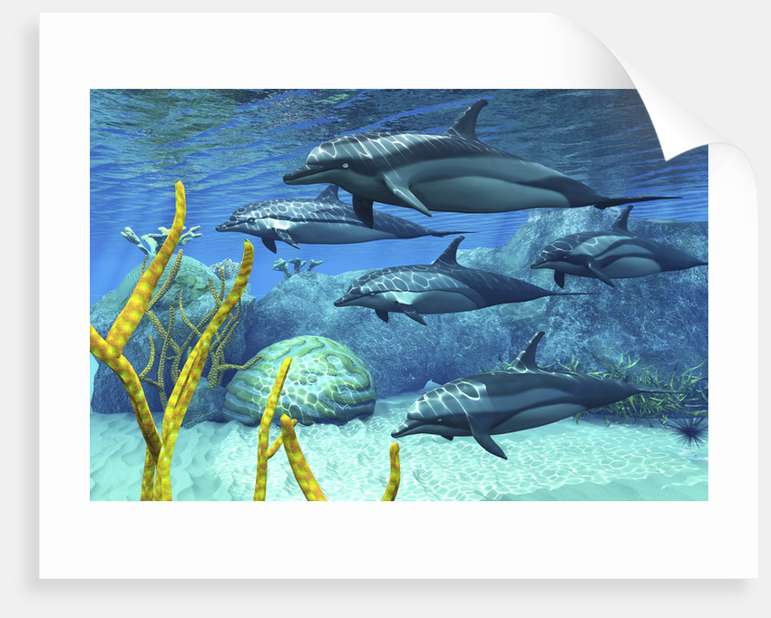 A pod of striped dolphins swimming along a reef. by Corey Ford