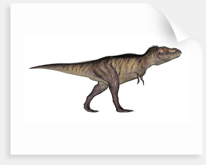 Tyrannosaurus Rex, white background. by Elena Duvernay
