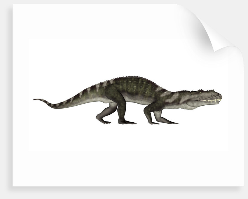 Prestosuchus dinosaur. by Elena Duvernay
