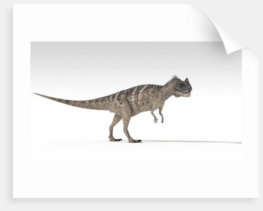Ceratosaurus dinosaur, white background. by Kostyantyn Ivanyshen