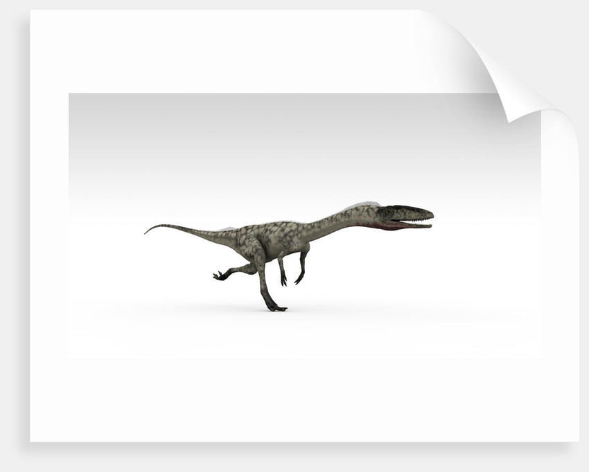 Coelophysis dinosaur, white background. by Kostyantyn Ivanyshen