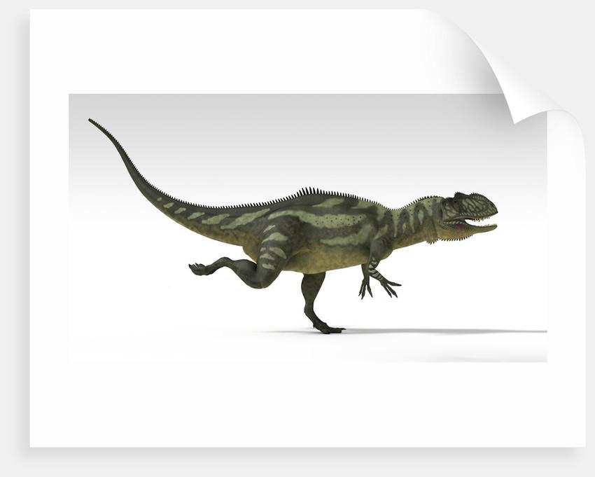 Yangchuanosaurus, dinosaur, white background. by Kostyantyn Ivanyshen