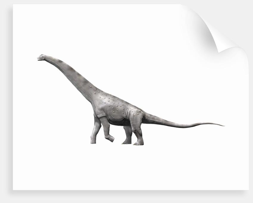 Alamosaurus sanjuanensis, a sauropod from the Late Cretaceous Period. by Nobumichi Tamura