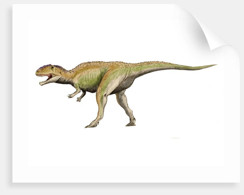Giganotosaurus dinosaur. by Nobumichi Tamura
