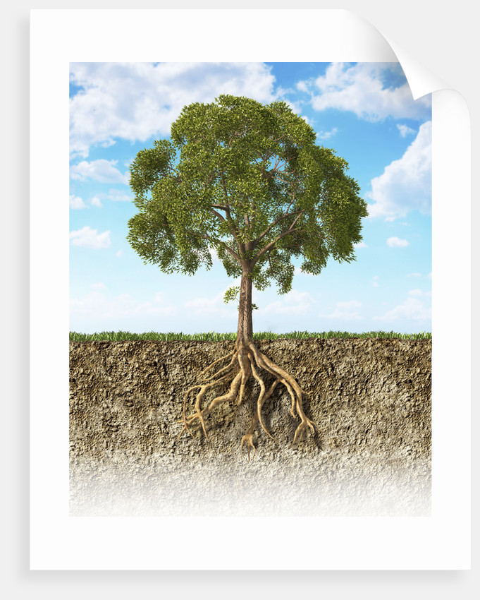 Cross section of soil showing a tree with its roots. by Leonello Calvetti