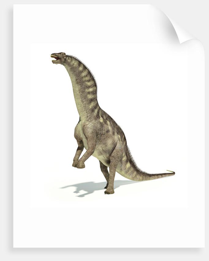 Amargasaurus dinosaur in dynamic posture. by Leonello Calvetti