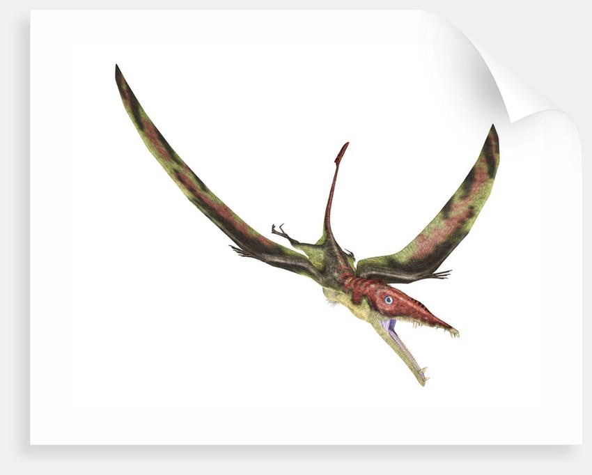 Eudimorphodon flying prehistoric reptile. by Leonello Calvetti