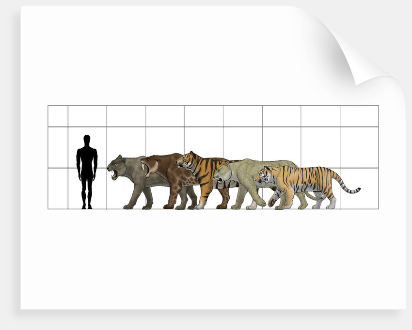 big felines size chart posters amp prints by vitor silva