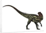 Allosaurus, a prehistoric era dinosaur. by Corey Ford