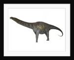 Argentinosaurus, a titanosaur from the Cretaceous period. by Corey Ford