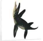 Liopleurodon, a large carnivorous marine reptile. by Corey Ford
