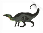 Camptosaurus, a herbivorous dinosaur from the Late Jurassic Period. by Corey Ford