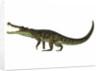 Kaprosuchus is an extinct genus of crocodile. by Corey Ford
