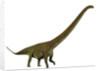 Mamenchisaurus, a plant-eating sauropod dinosaur. by Corey Ford