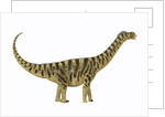 Camarasaurus was a sauropod dinosaur that lived during the Jurassic Age. by Corey Ford
