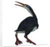 Hesperornis was a a flightless bird that lived during the Cretaceous Period. by Corey Ford