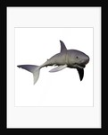 Mako Shark by Corey Ford