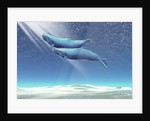 Two sperm whales near the surface of the ocean. by Corey Ford