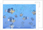A school of clownfish swimming in the sea. by Elena Duvernay