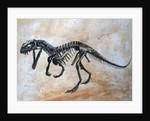 Ceratosaurus dinosaur skeleton. by Harm Plat