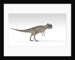 Ceratosaurus dinosaur, white background. by Kostyantyn Ivanyshen