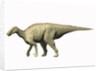 Pararhabdodon isonensis, Late Cretaceous of Spain. by Nobumichi Tamura