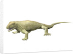 Pantelosaurus saxonicus, Early Permian of Germany. by Nobumichi Tamura