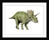 Anchiceratops dinosaur. by Nobumichi Tamura