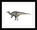 Camptosaurus dinosaur. by Nobumichi Tamura
