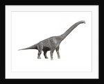 Giraffatitan dinosaur. by Nobumichi Tamura