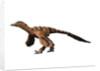 Sinornithosaurus dinosaur. by Nobumichi Tamura