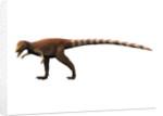 Sinosauropteryx dinosaur. by Nobumichi Tamura