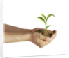 Man's hands holding soil with a little growing green plant. by Leonello Calvetti
