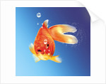 Goldfish with water bubbles. by Leonello Calvetti