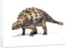 3D rendering of an Ankylosaurus dinosaur. by Leonello Calvetti
