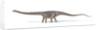Diplodocus dinosaur on white background. by Leonello Calvetti