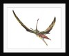 Eudimorphodon flying prehistoric reptile. by Leonello Calvetti