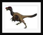 Citipati, an oviraptorid from the Cretaceous Period. by Vitor Silva