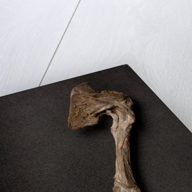 Child's arm, found in a Walsall chimney, known as the Hand of Glory by unknown