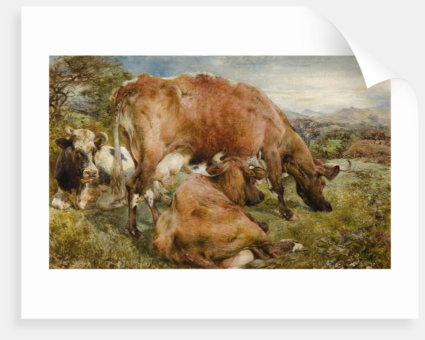 Three Cows in a Field, 1868 by unknown