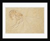 An Aeger tipularis shrimp fossil, Upper Jurassic Period. by unknown