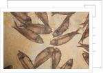 A slab of Knightia alta fish fossils, Eocene Epoch by unknown