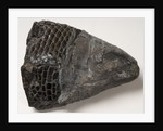 Fossilised fish by unknown