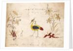 Pattern Book: Bird Design by unknown
