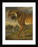 A Tiger, 1818 by Charles Towne